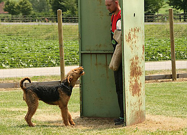 Airedale Terrier IPO