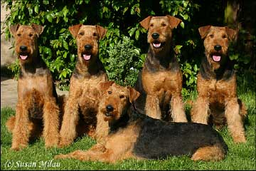 files/images/Fotos/Airedaleterrier_Fotos_01.jpg