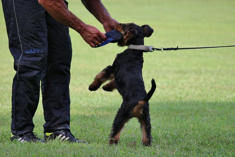 knurrt hund nicht mehr bevor er beißt
